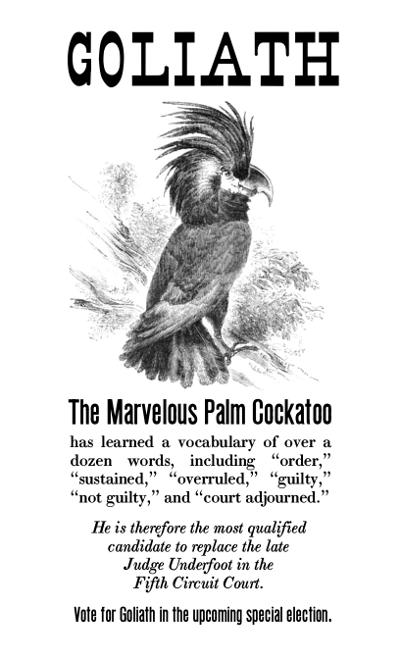 Goliath-the-Palm-Cockatoo