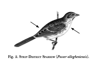 Birds-Fig-02
