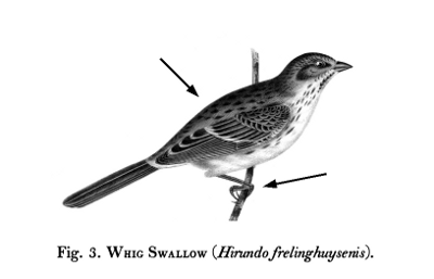 Birds-Fig-03