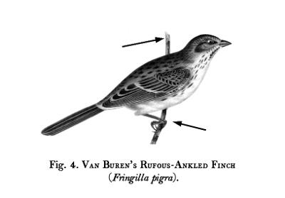 Birds-Fig-04