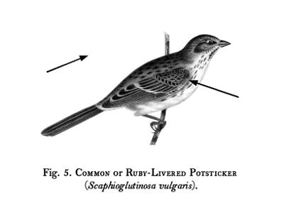Birds-Fig-05